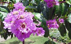 Flor Violeta (Raul Vinícius) Tags: flor violeta violet flower 紫 花