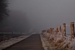 Nebuls / trail in to the mist (malp007) Tags: licht light shadow nebel mist zaun fence trail weg strase radweg outdoor fixpunkt baum tree