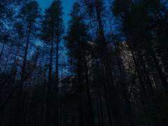 Rencontre de l'obscurite (Romain Talgorn) Tags: sf usa ca wild nature photography alcatraz golden gate forest night day trip road travel landscape california united states sea sky sun