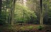 Protectors (Netsrak (on/off)) Tags: mist fog nebel wald forst forest woods autumn herbst fall tree trees baum bäume berg rheinlandpfalz deutschland de