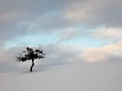 Résistance (nathaliedunaigre) Tags: paysage landscape nature arbre neige snow winter hiver clouds nuages ciel sky minimalisme minimalism