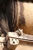 Delhi-133 (Andy Kaye) Tags: delhi india deccan indian new qutub minar qutb qutab qutabuddin aibak