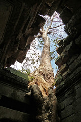 Breaking Free (brentflynn76) Tags: tree history temple photo ancient cambodia ruin siem reap khan preah