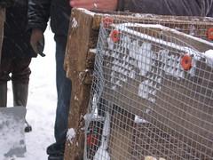 compost bin (barneshyrusa) Tags: compostbin growingpower