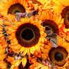 Color Map of the Sun (Sky Noir) Tags: flowers red brown sun black color yellow forest photography gold james farmers market map south hill sunflower rva skynoir