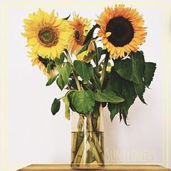 Sunflowers.  #day #sun #sunflower #summer #enjoy #life #instagood #flower #love #like