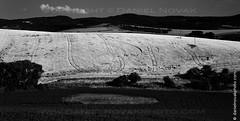 Field & Tracks, Nemotice, Czech Republic (DTB_2576) (masinka) Tags: light blackandwhite bw tractor monochrome field rural landscape photography european tracks shapes shades czechrepublic tones southernmoravia nemotice
