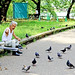 Old man give food to pigeons / 鳩にエサを与える男