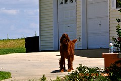 2014 August 13 Charley & Red Oak (King Kong 911) Tags: red dog storm tree al athens stump tornado redoak charley