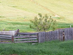 Fence, The Granger Ranch, Eden, Montana **EXPLORED** (teresue) Tags: ranch fence montana mt greatfalls eden granger 2014