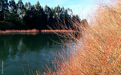 Río Tolten, Isla Llicán (*paz) Tags: green nature water colors ríotoltén islallicanteodorosmidtixregióndelaaraucaníachile