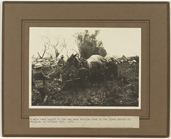 A mule team bogged in the mud near Potijze Farm, Ypres (Tasmanian Archive and Heritage Office Commons) Tags: war mud westernfront ww1 mules 1917 ypres crowther 19141918 potijzefarm