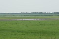 DSC06404 (Ton Smilde) Tags: oostvaardersplassen naturereserveinthenetherlands