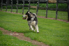 """Zarro Looking To See How Much Faster He Was Than The Rest Of His WooFPAK Mates • <a style=""""font-size:0.8em;"""" href=""""http://www.flickr.com/photos/96196263@N07/14879879791/"""" target=""""_blank"""">View on Flickr</a>"""