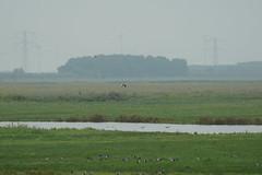DSC06402 (Ton Smilde) Tags: oostvaardersplassen naturereserveinthenetherlands