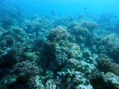Mnemba Atoll (stalderth) Tags: aquarium zanzibar thierry plongée atoll tanzanie mnemba stalder thierrystalder