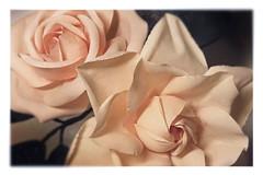 rose & Gardenia (HER.Cha.) Tags: paris france flower fleur rose brooch dyeing corsage gardenia fleuriste  artificielle