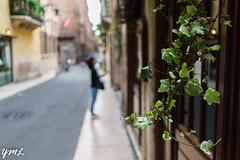 Verona's girl (yiming1218) Tags: italia verona