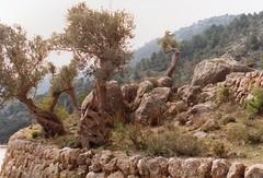 1992 Spain // Wandern auf Mallorca (maerzbecher-Deutschland zu Fuss) Tags: españa trekking spain hiking natur trail 1992 mallorca wandern spanien wanderweg maerzbecher