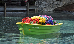 Something floral (littlestschnauzer) Tags: flowers summer water floral gardens tampa boats pretty florida small lagoon coloured busch 2014 brightly