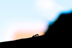 Gün sonu / The Day ends (Atakan Eser) Tags: work day ant shift backhome karınca gün mesai dsc7262 evedönüş iş
