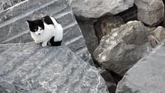 Gato en roca (Ru GarFer) Tags: blanco negro gato roca deba