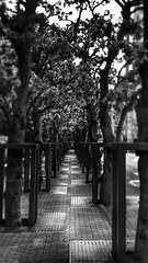 Street tree (20EURO) Tags: street tree monochrome stone bush pavement sony sidewalk    cloudiness                 xperia   w  so01f