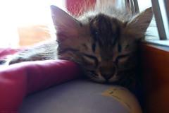 Sleeping time (Nefeli.Jeevas) Tags: pet cats pets cute animal animals cat adorable sleepy sweetheart hiding