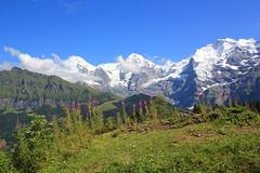 Eiger, Mönch and Jungfrau, Berner Oberland.