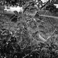 Spiderman's morning