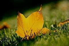 """inizio dell'autunno ("""" paolo ammannati """") Tags: autumn leaves foglie leaf foglia 1001nights autunno paoloammannati 1001nightsmagiccity"""