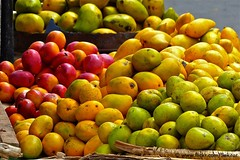 Mango season at Point Pedro, Jaffna peninsula (Sekitar) Tags: colour fruit season point pedro exotic mango srilanka peninsula jaffna earthasia