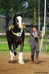 IMG_3607-k (Mandy Bramavi) Tags: show horse shire