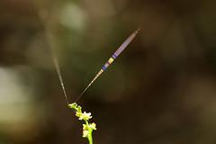 (sirius_1984) Tags: spidersilk