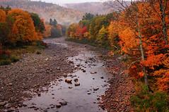 wild river (jtr27) Tags: dsc01838e jtr27 sony alpha nex6 nex emount mirrorless sigma 30mm f28 exdn wildriver river gilead maine newengland autumn foliage