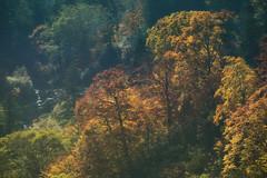 Wonders of the Season (jasohill) Tags: autumn october landscape tohoku vibrant city 2016 iwate trees adventure travel photography life colors hachimantai color japan nature glimmer sparkle eos 80d