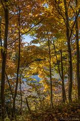 Waywayanda Autumn_4952 (smack53) Tags: smack53 waywayandastatepark trees lake pond autumn autumncolors fall fallcolors fallseason outdoors outside scenic scenery nikon d300 nikond300