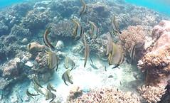 Life Beneath (Larterman) Tags: bali indonesia indonesian southeastasia seasia south east asia asian travel travelphotography travelphotos diving snorkeling underwater coral fish sea beneath shoal