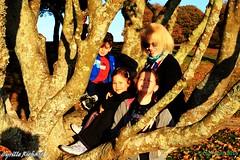 Belvdre de Ste Anne- dans l'arbre... (10) (richardcyrille) Tags: bretagne finistre goulet brest