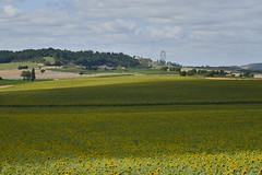L'ombre d'un nuage sur un champ de tournesols (Flikkersteph -4,000,000 views ,thank you!) Tags: countryside rural landscape nature summer beautiful fields clearsky champagneetfontaine prigord france