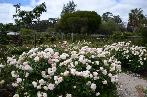 DSC_6008 Waite Rose Garden, Uni of Adelaide, South Australia