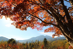 Autumn colors (Teruhide Tomori) Tags: landscape kayede maple red tree nagano japan field nature highland           autumn  norikura mountainside