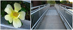 blooming at the town hall (muffett68 ) Tags: diptych perspective picmonkey weekofdiptychs