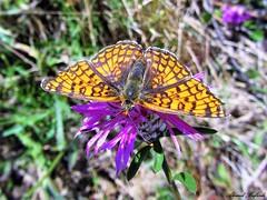 Butterfly 1056 (+360000 views!) Tags: butterfly borboleta farfalla mariposa papillon schmetterling