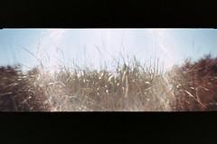 008_8 (*Snap_Shot*) Tags: anscopanoramapix ansco panorama plasticcamera plasticlens flippedlens plasticfantastic jettyisland everett everettwa seattleflickrmeetup msejettyisland1308 anscopixpanorama buyfilmnotmegapixles flimsnotdead expiredfilm fujifilm200 beliveinfilm ishootfilm 35mm panoramic fakepanorama poe portofeverett