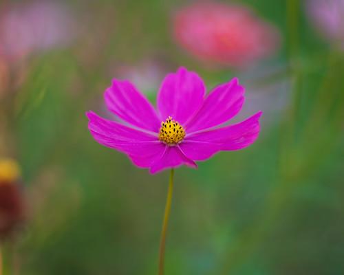 Pink n Pastel...