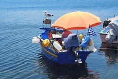 Teamwork (Steenjep) Tags: patmos holiday ferie greece grkenland grikos port harbour fishingboat fisherman seagull boat water blue