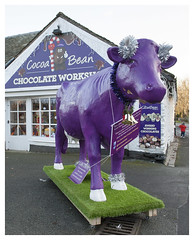 Purple Cow (theimagebusiness) Tags: theimagebusiness theimagebusinesscouk travel tourism touristattraction england d700 fun historic nikon outdoors outside open outdoor retail street uk weather shop store shopping december christmas storefront quirky town gift arty craft artistic homemade products sign lettering hawkshead lakedistrict cumbria