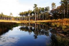 Herfst spiegeling / Autumn reflection (jo.misere) Tags: westerlo belgie belgium heide bos vijver