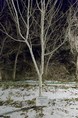Gennady Padalka (Granmuc) Tags: baikonur cosmonaut alley trees